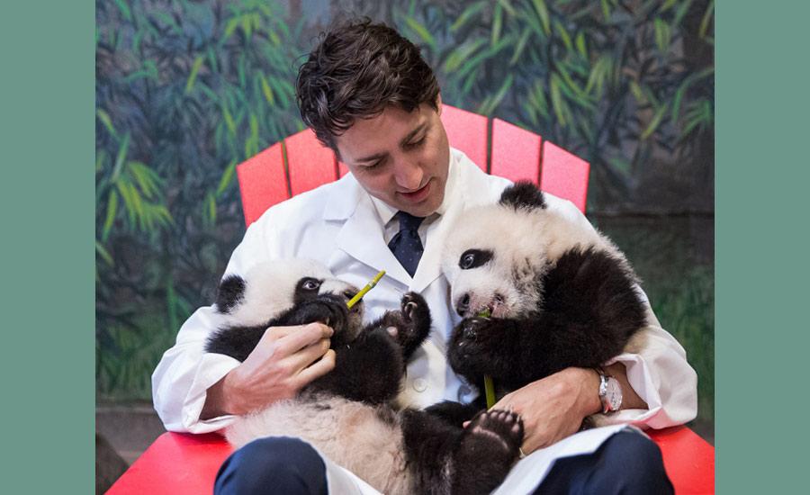 justin-pandas